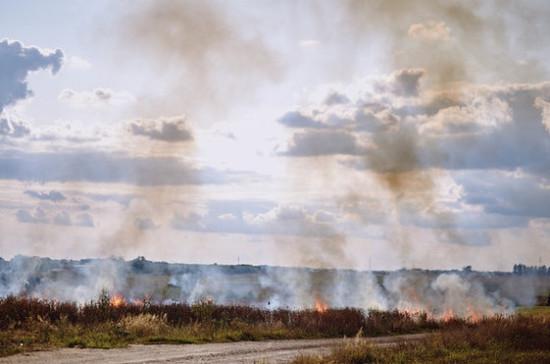 В Воронежской области ввели режим ЧС из-за лесных пожаров