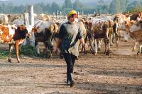 Работники сельского хозяйства России отмечают профессиональный праздник