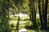 На сохранение лесов планируют направить 5,9 млрд рублей в 2021 году