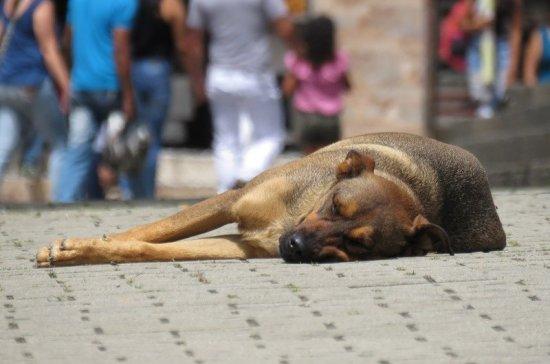 В Петербурге бродячих собак бросили дважды