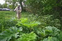 Минюст: в новом КоАП регионы смогут сами определять перечень опасных растений