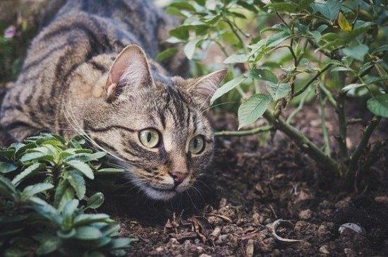 Депутат Госдумы предложил регистрировать бездомных собак и кошек