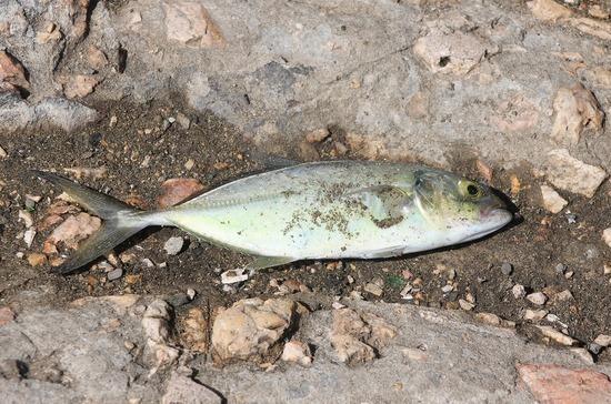 Причиной массовой гибели рыбы в водохранилище в Калмыкии могла стать нехватка кислорода