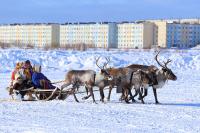 В Арктике могут появиться цифровые сельсоветы