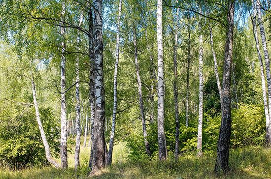 Русскому лесу пропишут строгий учёт