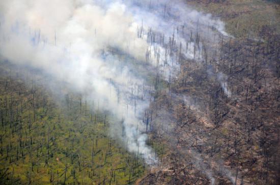 Глава Рослесхоза сравнил площади лесных пожаров в 2019 и 2020 годах