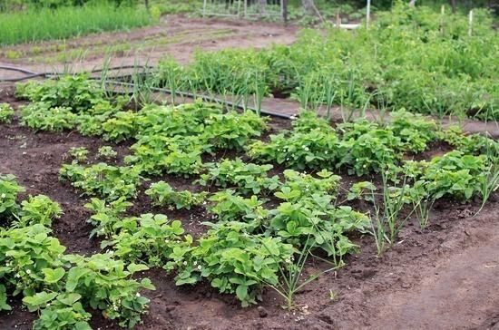 Школы могут получить земли под огороды в бессрочное пользование