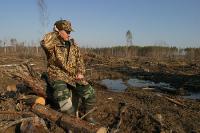 В Совфеде предлагают запретить находиться в лесу с техникой для заготовки древесины без документов