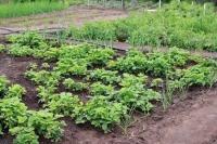 «Справедливая Россия» предлагает бесплатно снабжать садоводов водой и электричеством