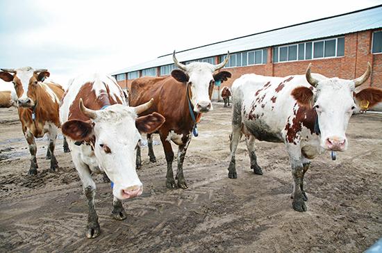 В Совете Федерации поддерживают инициативу поставить на учёт всех сельхозживотных