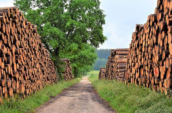 В России разработают новую стратегию развития лесного комплекса