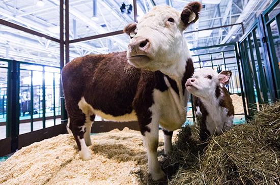 Нулевую ставку НДС для племенного животноводства могут продлить до конца 2022 года