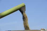 Минсельхоз предложил временно ограничить экспорт зерна
