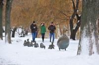Предстоящая зима будет холоднее предыдущей, заявил Вильфанд