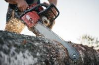 Реформа лесной отрасли оставит чёрных лесорубов не у дел