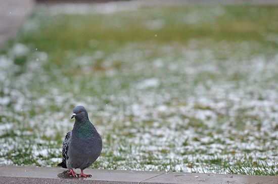 Синоптик рассказал, когда вМоскву придет «метеорологическая зима»