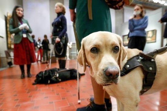 Для владельцев собак-поводырей предлагают сделать исключения из правил