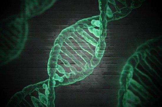 Учёный объяснил, как ДНК животных поможет полиции ловить преступников
