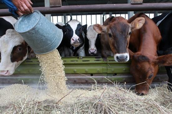 Применение лекарств в животноводстве могут взять под жёсткий контроль