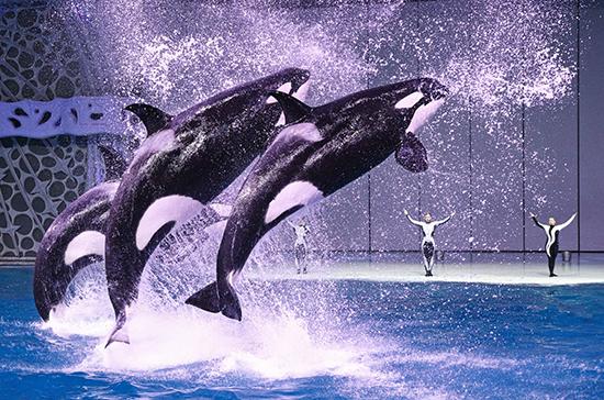 Шоу с морскими животными могут уйти в прошлое
