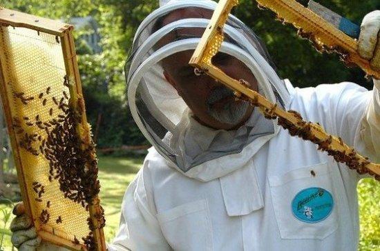 Пчеловоды просят льгот