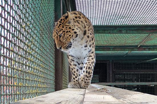 Конфискованных животных предлагают бесплатно передавать в зоопарки