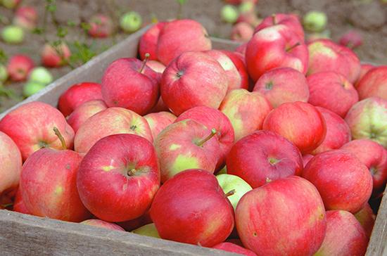 В России начал действовать запрет на ввоз томатов и яблок из Азербайджана