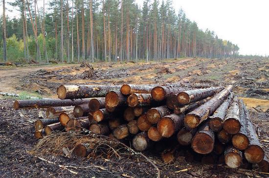 Комитет Госдумы одобрил проект о создании единой системы учёта древесины