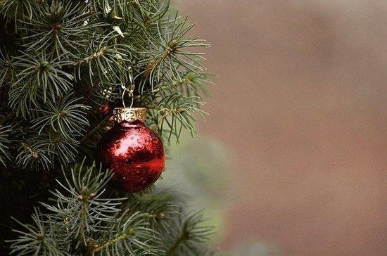 Жителям Подмосковья можно будет самим срубить новогоднюю ель