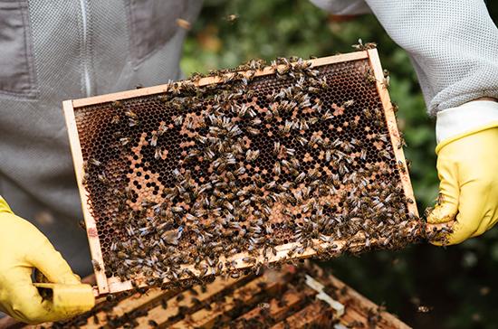 Найден способ защитить пчёл и повысить качество меда