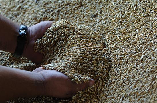 Путин дал прогноз по урожаю зерна на 2020 год