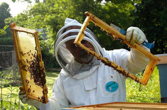 Пчеловодам предоставят льготы