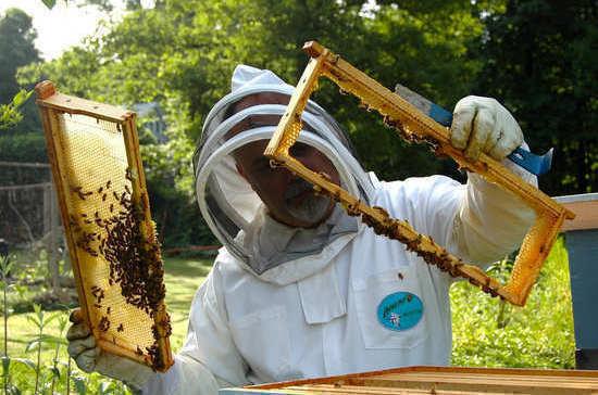Государство поможет пчеловодам