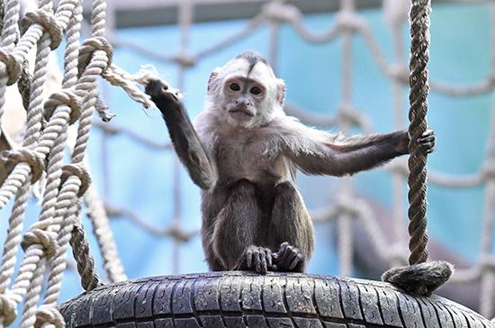 Депутаты Башкирии предложили запретить передвижные зоопарки и цирки