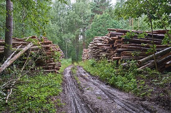 С 1 января контроль за оборотом древесины ужесточат в четырех регионах