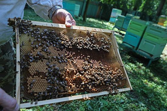 Путин подписал закон о пчеловодстве