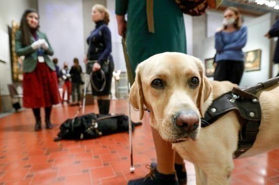 В Госдуму внесли проект о приравнивании собак-помощников к поводырям