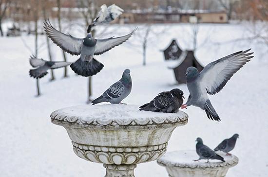 В Гидрометцентре призвали не ждать рождественских морозов