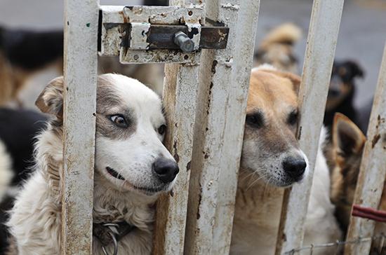 В России разрабатывают федеральный проект по развитию сети приютов для животных