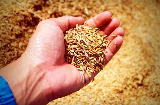Подходы к контролю за ГМО-семенами предлагают унифицировать для всех стран ЕАЭС