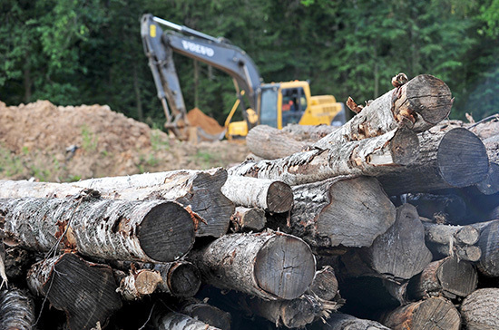 Леса «оцифруют» для спасения от незаконных вырубок