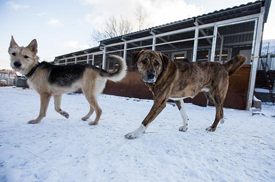 Депутат просит проверить работу приютов для животных в Улан-Удэ