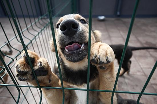 В кабмин внесли проект о наказании за жестокое обращение с животными