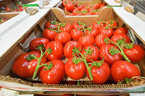 Россия частично снимает запрет на ввоз томатов и перцев из Казахстана