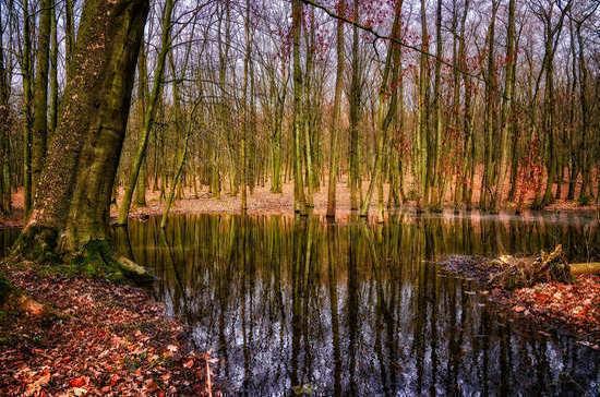 В болотах предлагают разрешить разведку и добычу полезных ископаемых