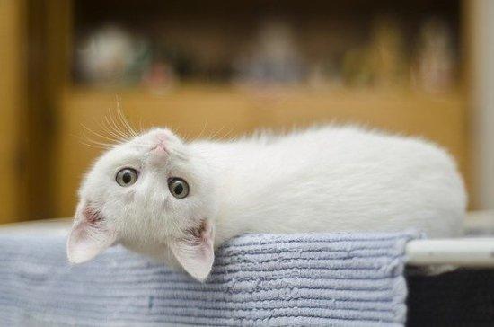 Комитет Госдумы поддержал проект о запрете изымать домашних животных за долги