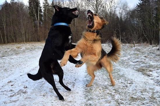Устроителей собачьих боёв требуют наказывать