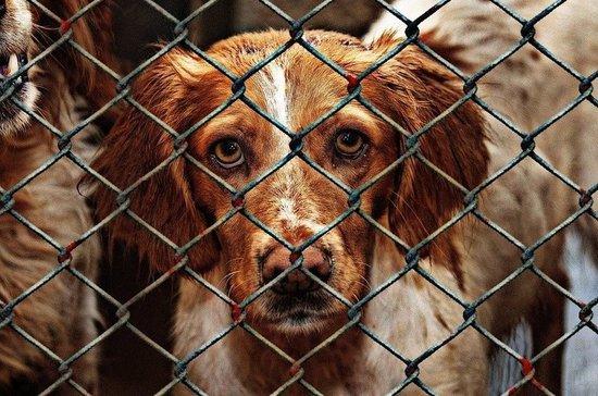 Броневицкая: казённые приюты для животных без волонтёров едва справлялись