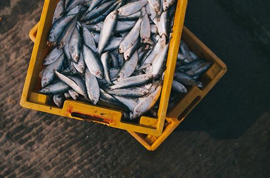 Кабмин может разрешить первичную обработку рыбы на судах