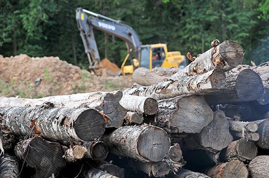 В России появится единая система учёта сделок с древесиной